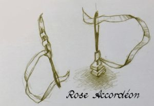 Rose accordéon Léa Stansal
